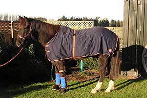 Equine Magnetic Products