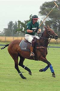 International Polo Pony